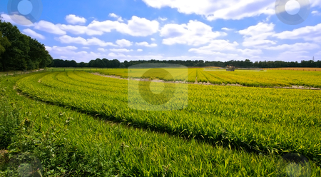 Green pasture stock photo, Bright green farmlandscape on a sunny day with blue sky and clouds by Karin Claus