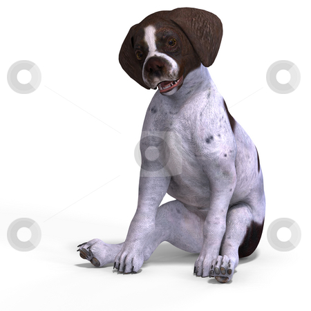 Cute puppy shorthair stock photo, Very cute young dog over white with Clipping Path by Ralf Kraft