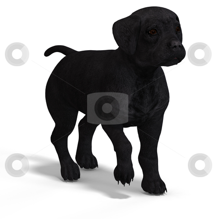 Cute puppy labrador stock photo, Very cute young dog over white with Clipping Path by Ralf Kraft