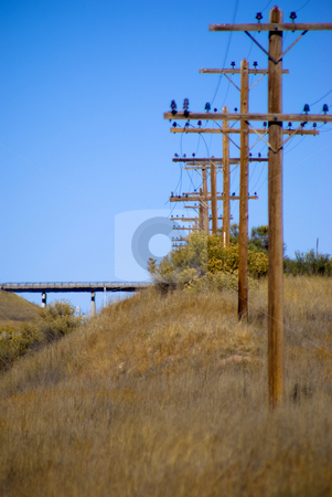 Line of power poles stock photo, Electrical power poles in a line by RCarner Photography