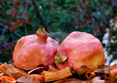 Dry Pomegranates stock photo, Two dry red pomegranates surrounded with autumn colors by Denis Radovanovic