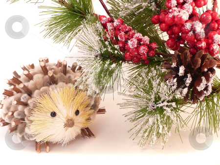 Winter Hedgehog stock photo,  by Corinna Walby