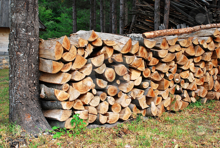 Wood pile stock photo, Wood in pile by tree in forest outdoor by Julija Sapic