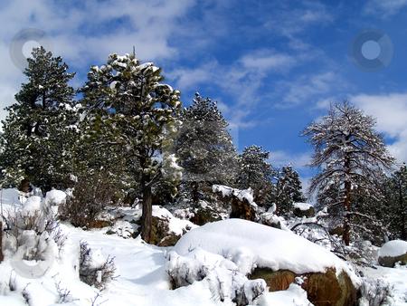 Crisp Winter Air stock photo, Fresh Snow in Rocky Mountain National Park by John McLaird