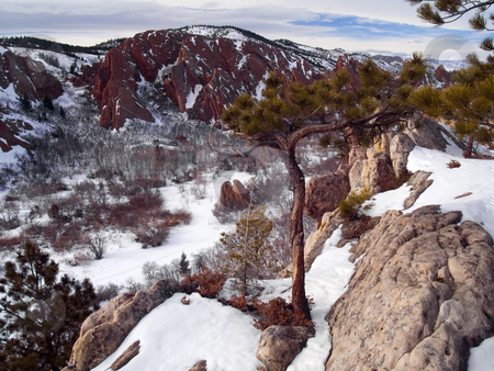 Winter Overlook Tree stock photo, A November image of the Lyons Overlook at Roxborough State Park, Colorado by John McLaird