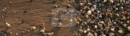 The colored shells on the  beach. stock photo, Many colored shells on the sea sand. by Viachaslau Barysevich