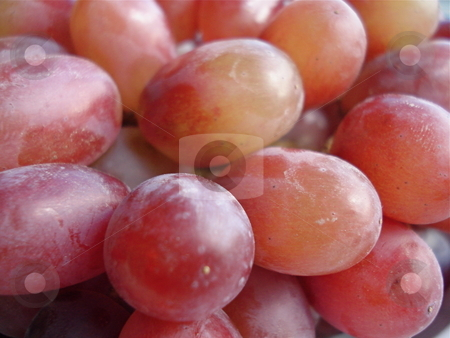 Bunches of Grapes stock photo, Grapes in a bunch shine in the light of a nearby window. by Ben O'Neal