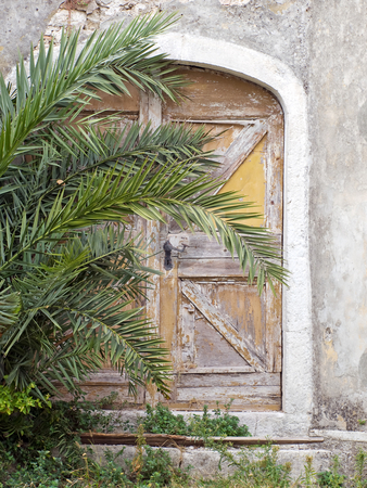 Old hidden door stock photo, Old locked door, hidden behind a palm branches. by Sinisa Botas