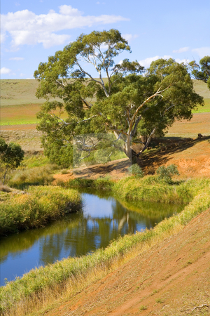 White Gum Bend stock photo, A majestic White Gum tree overhangs a meandering river in the Barossa Valley of South Australia by Mike Dawson