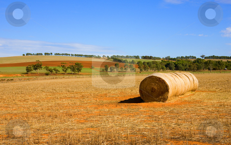 Rural PAtterns stock photo, A round bale of straw foreground among the stubble with the patterns of various crops creating lines on the hill behind in South Australia by Mike Dawson