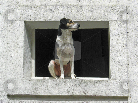White Dog on window, Brittany, Northern France stock photo, White Dog on window, Brittany, Northern France by Lothar Hinz