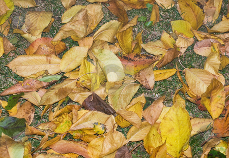 Dry leaves stock photo, Dry leaves spread over grass in november by Ivan Paunovic