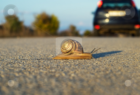 Snail's step stock photo, How to survive on that speed!? Metaphor. by Sinisa Botas