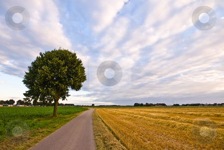 Country road with tree in a  farmlandscape  stock photo, Country road with tree in a  farmlandscape with cloudy sky by Karin Claus