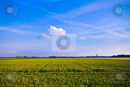 Almost ready stock photo, Farmland almost ready for harvest with blue sky and cloud by Karin Claus