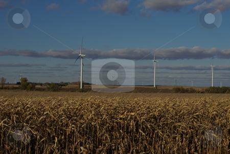 Wind power and biofuel stock photo, Wind turbines compete with fields of corn on the southern Minnesota prarie.  Wind power and field corn (biofuel) have become alternative energy sources developed to reduce US dependence on oil. by Dennis Thomsen