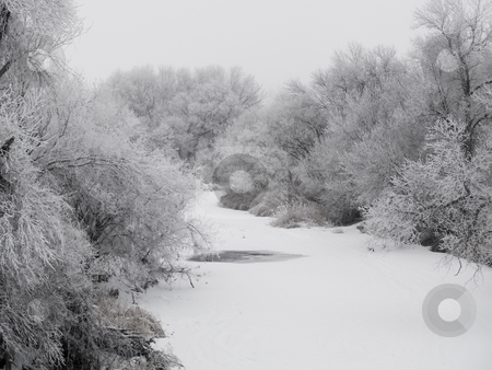 Frosted Creek Bank stock photo, Frosted creek bank on a foggy December morning in South Dakota. by John McLaird