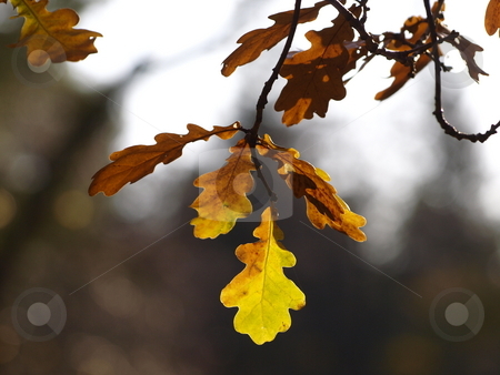 Autumn Leaves stock photo, Colourful autumn leaves by Lars Kastilan