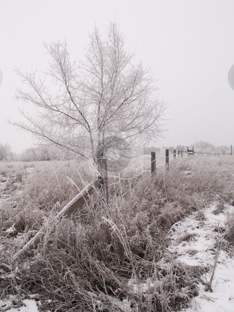 Fence & Tree in Winter stock photo, Frosted rural winter scene of a fence and tree between two fields. by John McLaird