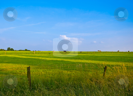 Fresh green pasture and blue sky stock photo, Fresh green pasture with grazing cows in the distance by Karin Claus