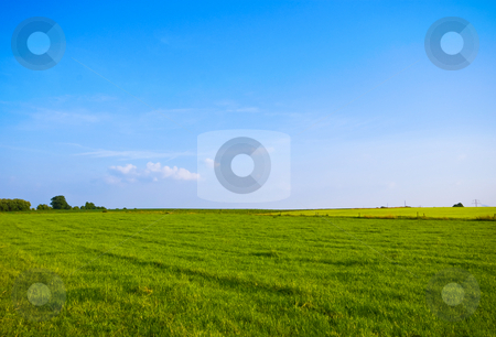 Green meadow stock photo, Green meadow wiith bright blue sky by Karin Claus