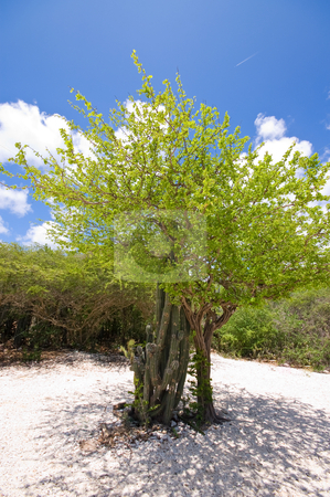 Bright tropical beach tree stock photo, Lovely green tropical beach tree with blue cloudy sky by Karin Claus