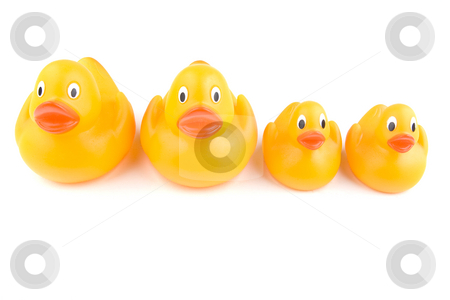 Duck Group stock photo, Two adult rubber ducks stand next to two juveniles by Steve Smith
