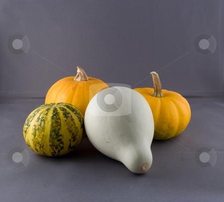 Pumkins stock photo, Pumpkin is a gourd-like squash of the genus Cucurbita and the family Cucurbitaceae (which also includes gourds) by Mariusz Jurgielewicz
