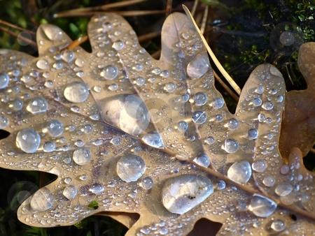 Waterdrops stock photo, Waterdrops on a leaf by Lars Kastilan