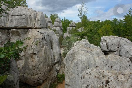 Bois de Paiolive stock photo, Bois de Paiolive by Wolfgang Heidasch