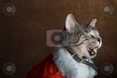 Tired Cat stock photo, A cat dressed in Christmas clothing taking a big yawn by Richard Nelson