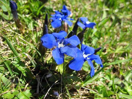 Blooming flowers stock photo,  by Wolfgang Heidasch