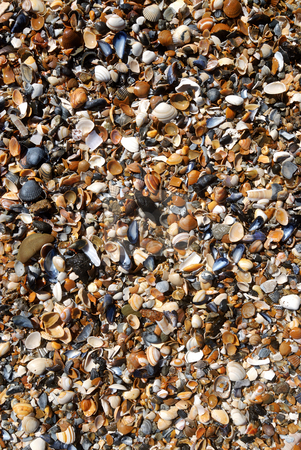Sand and shells on the beach stock photo, Details of wet clean beach. Texture of shells, sand and stones by Wino Evertz
