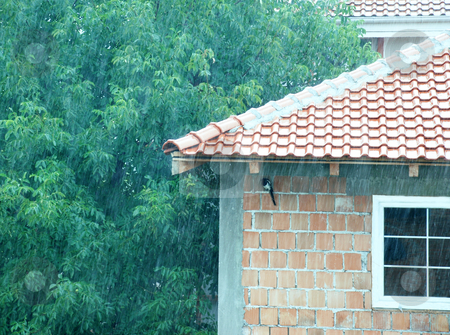 Rainy day and hiding bird stock photo, Magpie hiding from rain under tiled roof by Julija Sapic