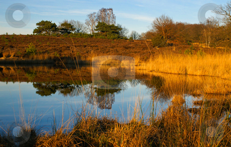 Autumn reflection at a pond stock photo, Vivid autumn scenery at a pond in the late afternoon by Karin Claus