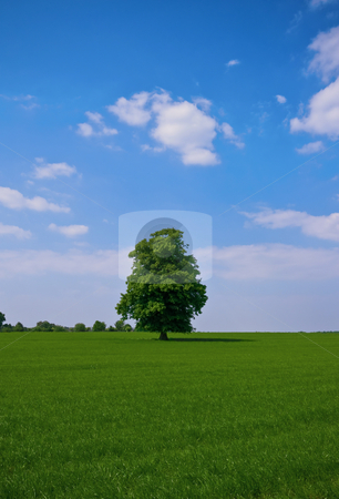 Green pasture and blue sky  stock photo, Green pasture and blue sky with a lone some standing tree in the back by Karin Claus