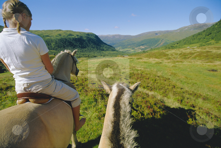 Young woman and two horses stock photo,  by Monkey Business Images
