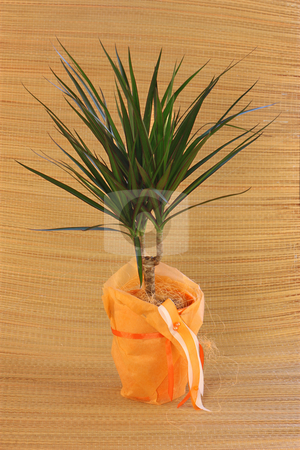 Houseplant stock photo, Nice houseplant in orange and green. by Gyozo Toth