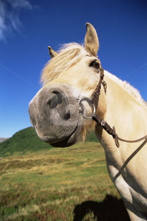 Tan colored horse standing in field stock photo,  by Monkey Business Images