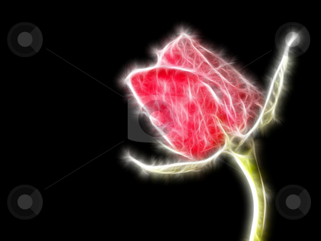 Christmas Rose stock photo, A single red rose taken with a black background then Manipulated by Stephen Inglis