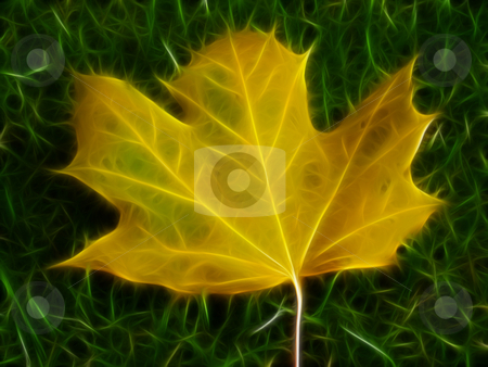 Manipulated Leaf stock photo, Autumn leaf with a grass background manipulated good for a background by Stephen Inglis