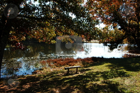 Park bench  stock photo, A park bench scene during the fall of the year along the lake by Tim Markley