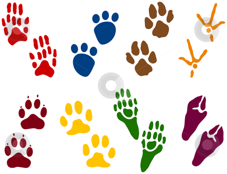 Eight sets of Animal Tracks stock vector clipart, Eight sets of Animal Tracks by Adrian Sawvel
