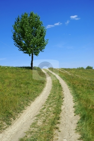 Dirt road tree stock photo, Dirt road tree - green fields, paths, the blue sky, mountain by Milsi Art