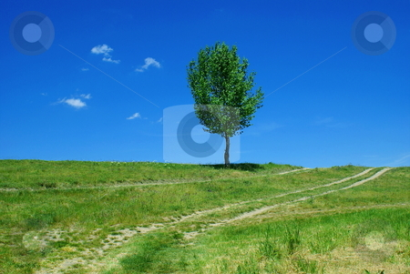 Road tree stock photo, Road tree - green fields, paths, the blue sky, mountain by Milsi Art