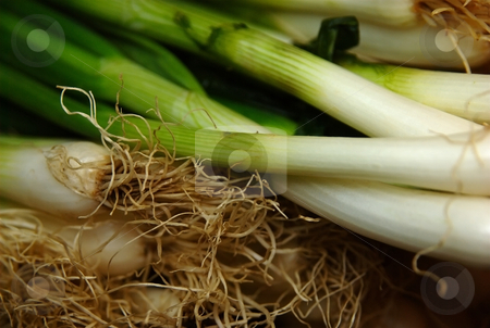 Spring onion stock photo, Spring onion close up with focus on root by Milsi Art