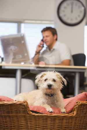 Dog lying in home office with man in background stock photo,  by Monkey Business Images