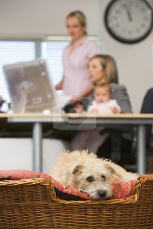 Dog lying in home office with two women and a baby in background stock photo,  by Monkey Business Images