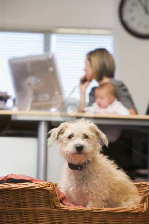Dog sitting in home office with woman holding baby in background stock photo,  by Monkey Business Images