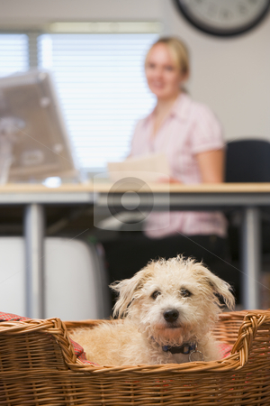 Dog lying in home office with woman in background stock photo,  by Monkey Business Images